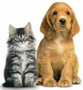 Pets, Animals & PEMF